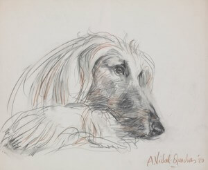 Afghan hound – right profile pencil and crayon, 1980